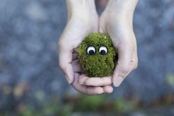 Yêu thiên nhiên - Rêu sinh thái trên bàn tay